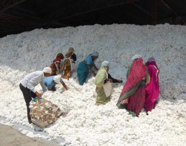 Cotton Pre Clening-01