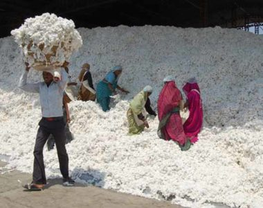 Cotton Pre Clening-02